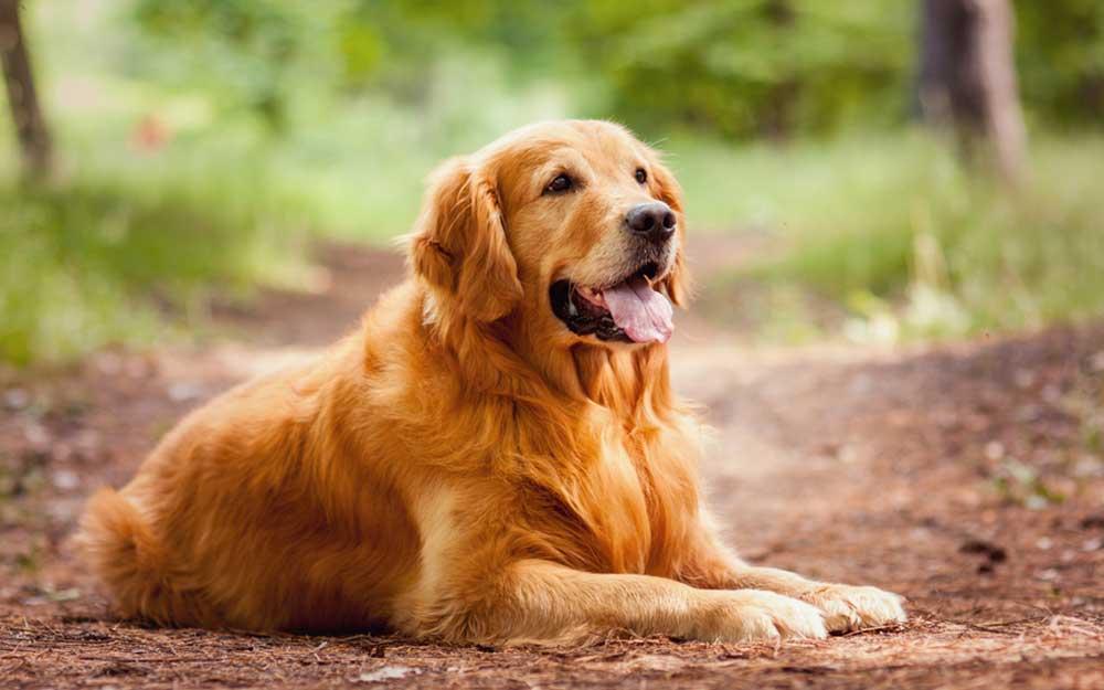 het beste voor je hond